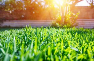 Lawn Edging Ideas 2020