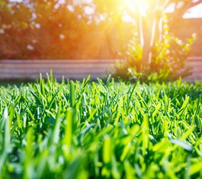 Lawn Edging Ideas 2020