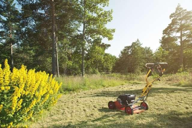 best lawn mower 2021